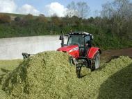 Maize Harvest tips