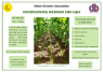 Undersowing Webinar 18th May